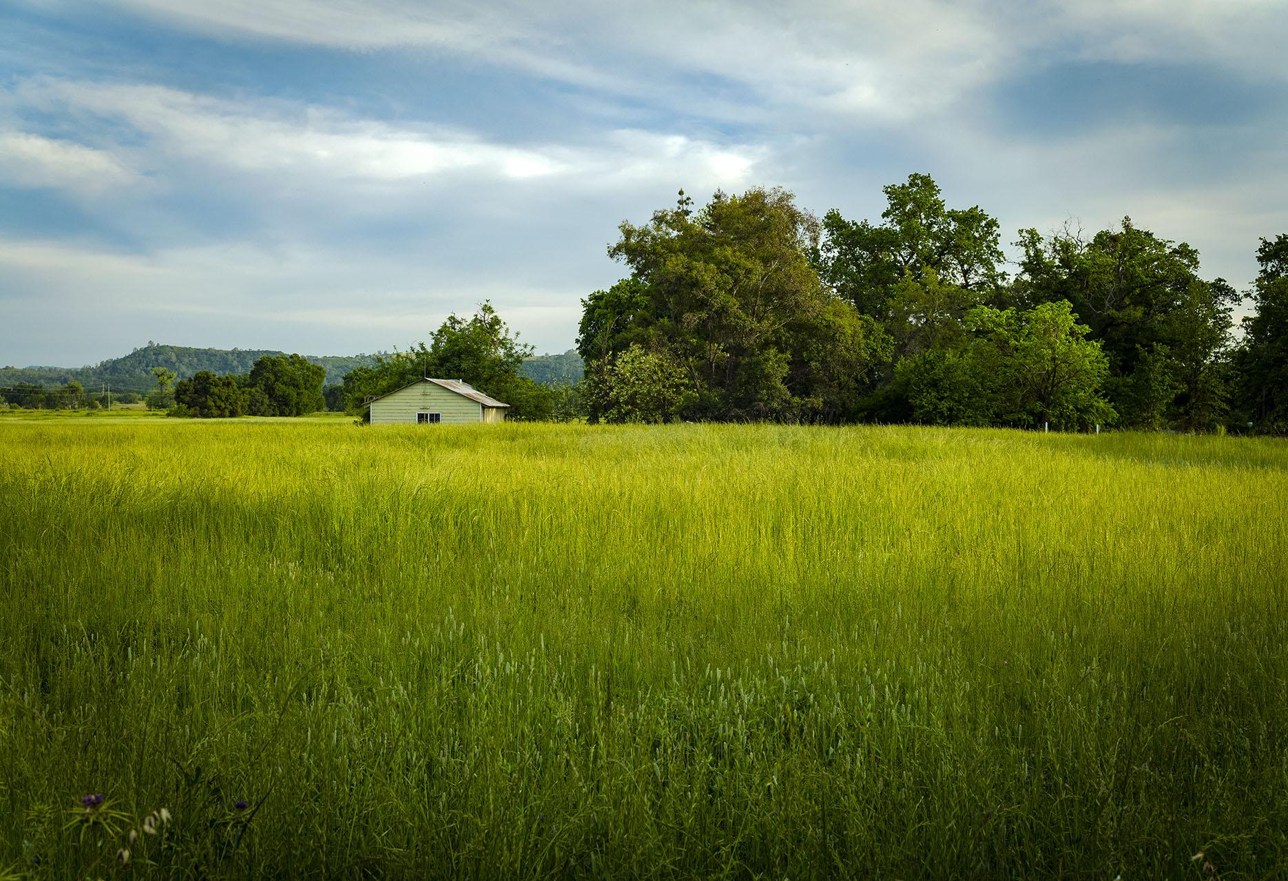 jeff-green-california-meadow