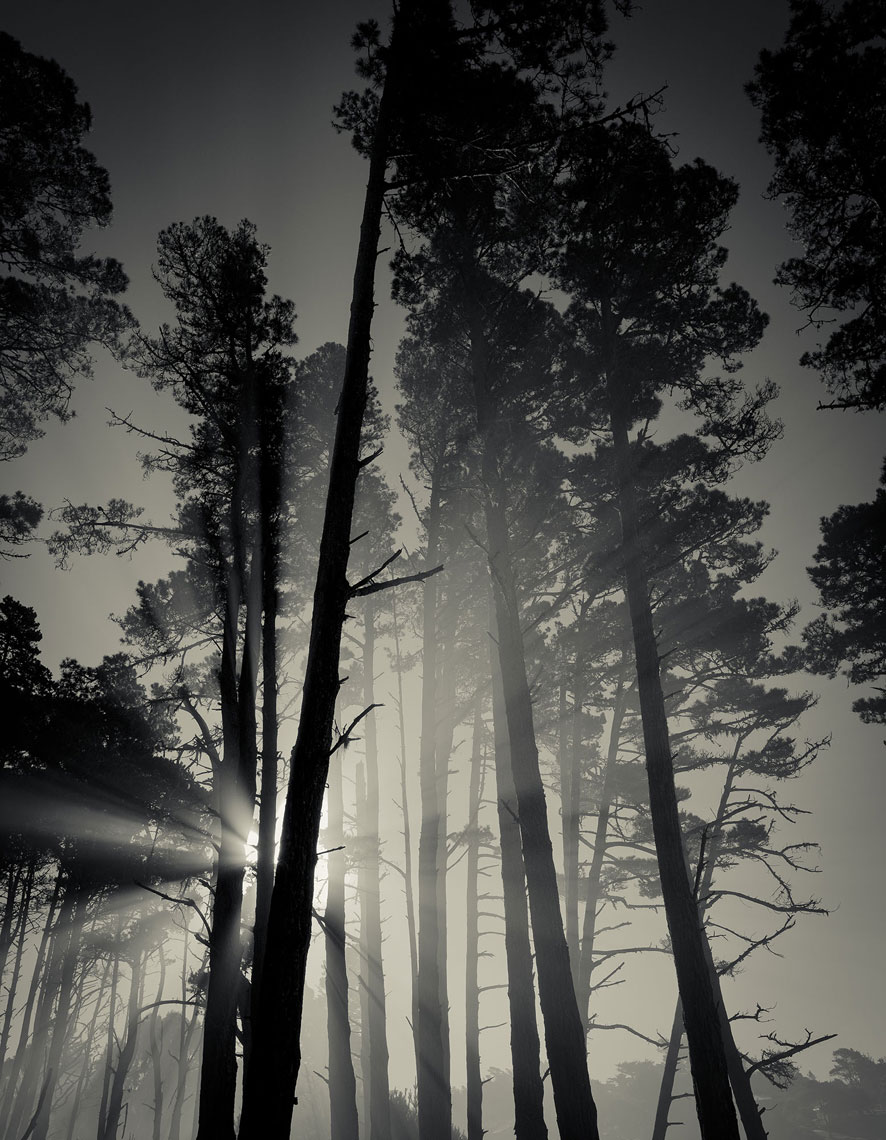 jeff-green-trees-sun-rays-california-black-and-white